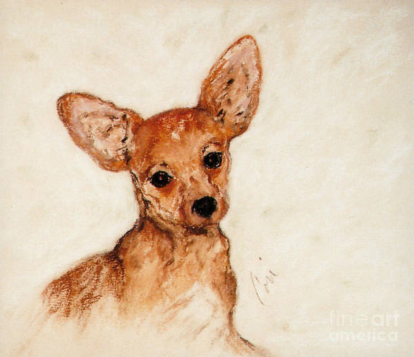 Chihuahua Poster featuring the drawing Tavi by Cori Solomon