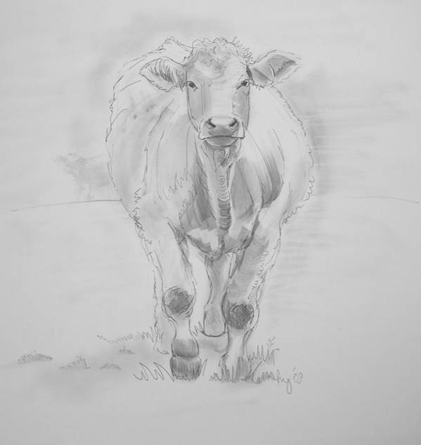Cows Poster featuring the drawing Cow Drawing by Mike Jory