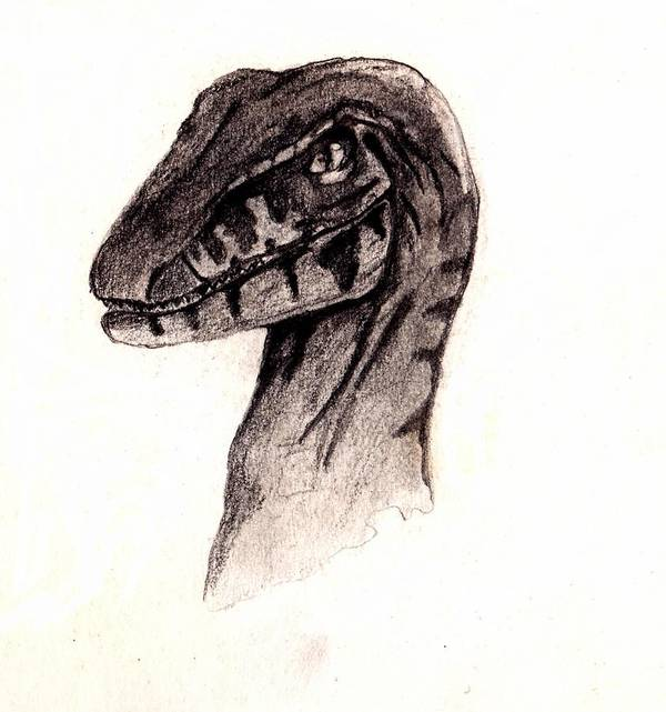 Raptor Poster featuring the drawing Raptor by Julio Haro
