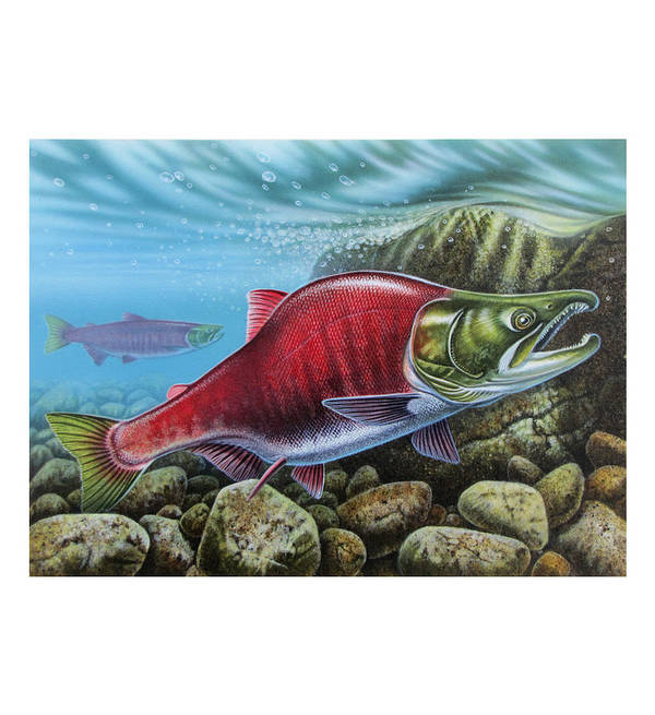 Jon Q Wright Poster featuring the painting Sockeye Salmon by JQ Licensing