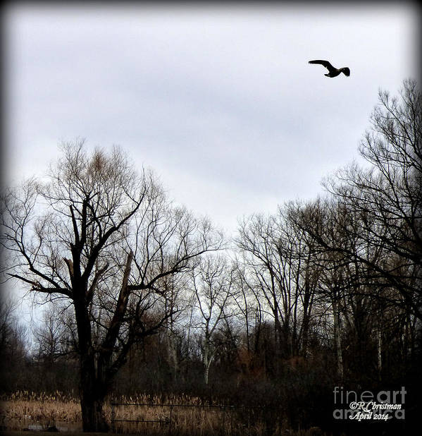 Landscape Poster featuring the photograph A Single Soul by Rennae Christman