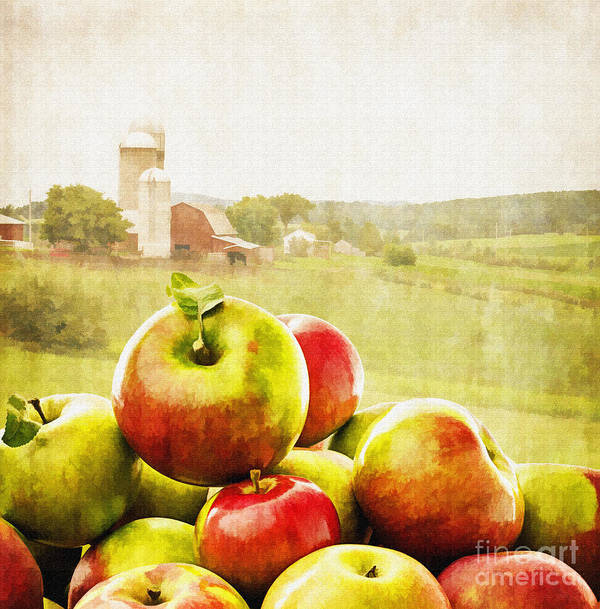 Apple Poster featuring the photograph Apple Picking Time by Edward Fielding