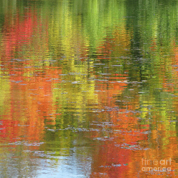 Autumn Poster featuring the photograph Autumn Water Colors by Ann Horn