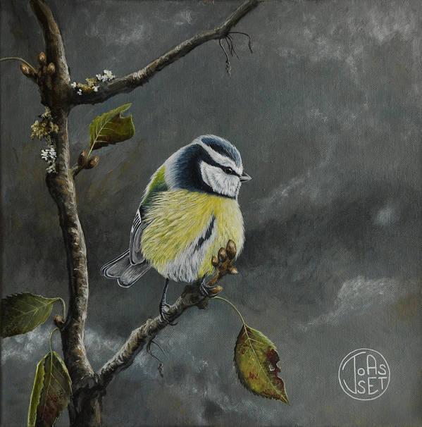 Bird Poster featuring the painting Blue Tit Near Winter by Jennifer Joasset