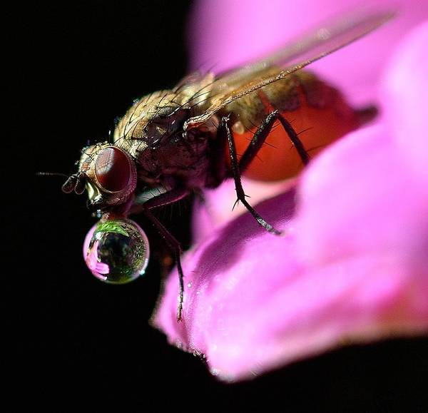Fly With Bubble Poster featuring the photograph Bubble Gum by Marcus George