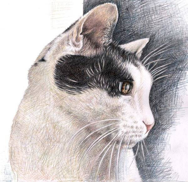 Cat Poster featuring the drawing Cats View by Nicole Zeug