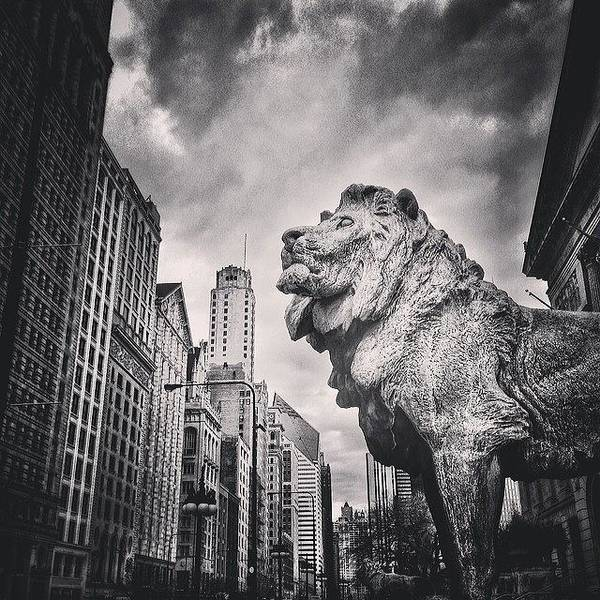 America Poster featuring the photograph Art Institute of Chicago Lion Picture by Paul Velgos