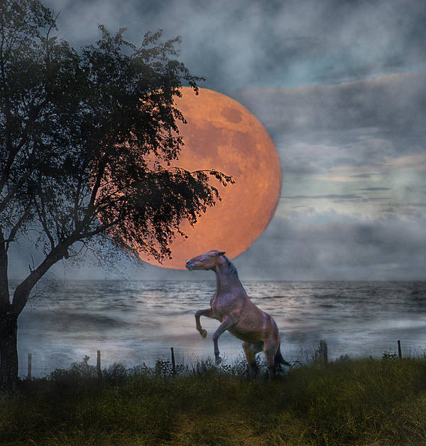 Horse Poster featuring the digital art Claiming The Moon by Betsy Knapp