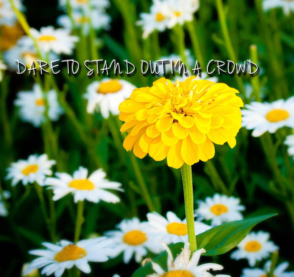 Landscape Poster featuring the photograph Dare To Stand Out In A Crowd by Virginia Folkman