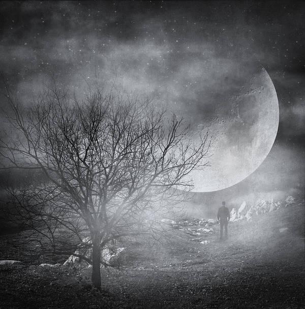 Tree Poster featuring the photograph Dark Night Sky Paradox by Taylan Apukovska