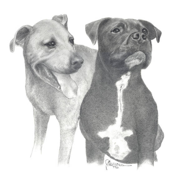 Pencil Drawing Print Poster featuring the drawing Dippy And Muggs by Joe Olivares