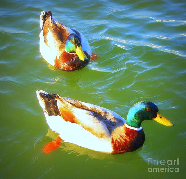 Ducks Poster featuring the photograph Get Your Ducks In A Row by Jodie Scheller