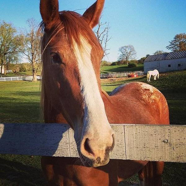 Cute Poster featuring the photograph #horse #country #girl #farm #awesome by Amber Campanaro