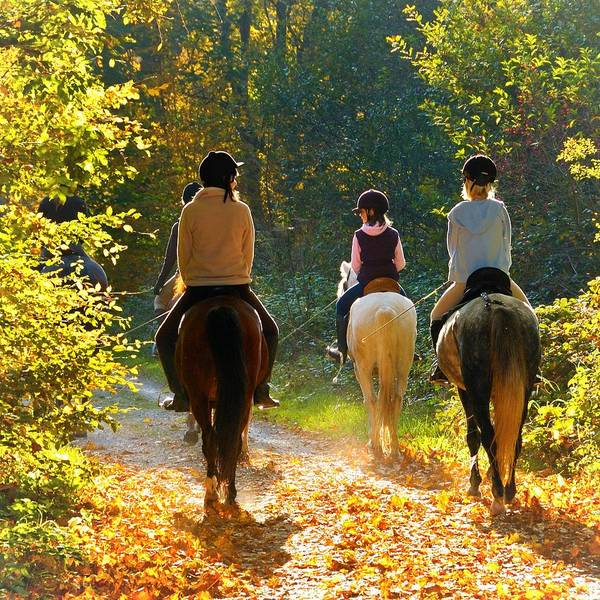 Horses Poster featuring the photograph Horseback riding in the autumnal forest by Matthias Hauser