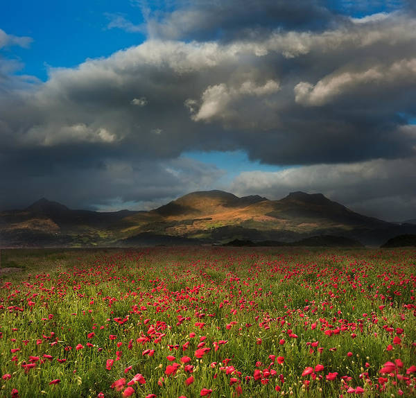 Landscape Poster featuring the photograph Landscape Of Poppy Fields In Front Of Mountain Range With Dramat by Matthew Gibson