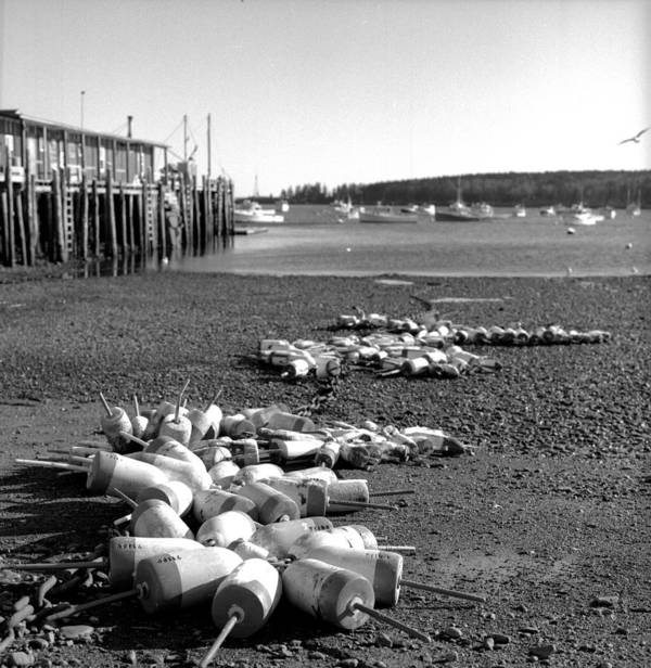 Black And White Poster featuring the photograph Lobster Buoys 13 by Timothy Bischoff