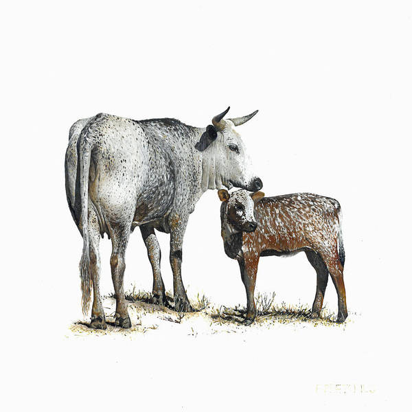 Nguni Poster featuring the painting Nguni Cow and Calf 2 by Edgar Pretorius