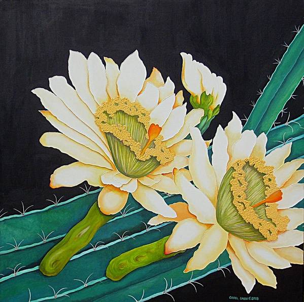 Cacti Poster featuring the painting Night Blooming Cactus by Carol Sabo