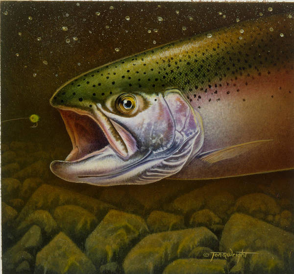 Jon Q Wright Poster featuring the painting North Shore Steelhead by Jon Q Wright