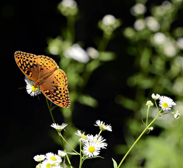 Butterfly Poster featuring the photograph Peaceful Forest by Susan Leggett