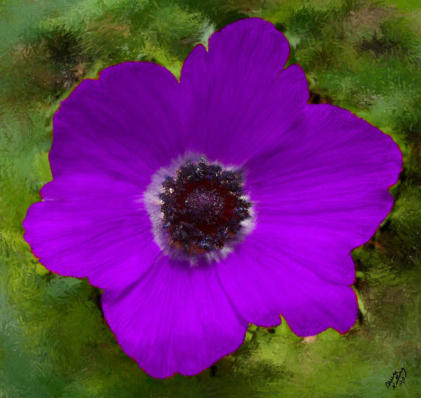 Flower Poster featuring the painting Purple Calanit Magen by Bruce Nutting
