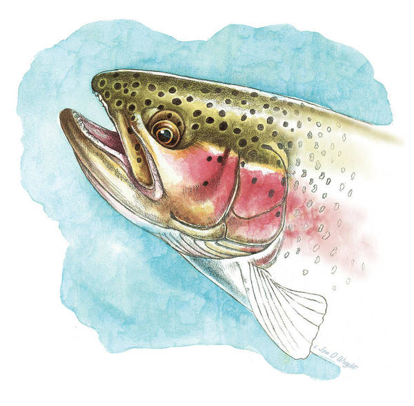 Jon Q Wright Poster featuring the painting Rainbow Trout Study by JQ Licensing
