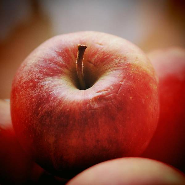 Apple Poster featuring the photograph Red apple by Matthias Hauser