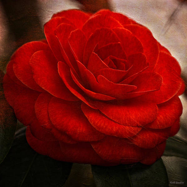 Flower Poster featuring the photograph Red Camelia by Keith Gondron