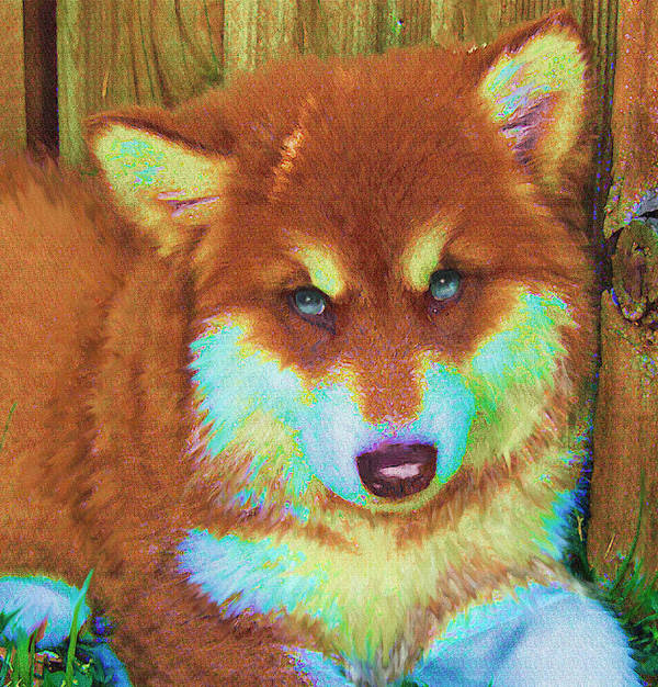 Malamute Poster featuring the digital art Red Malamute by Jane Schnetlage