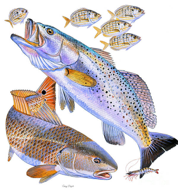 Trout Poster featuring the painting Redfish Trout by Carey Chen