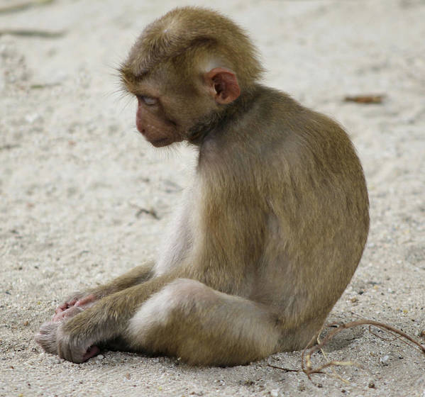Image result for sad monkey