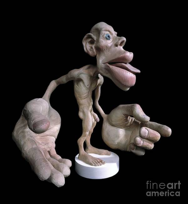 Sensory Homunculus Poster By Natural History Museum London
