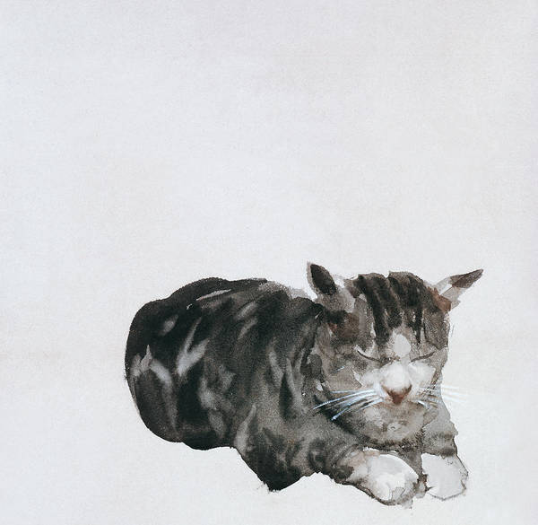 Cat Poster featuring the painting Study Of Cat by Giuseppe De Nittis