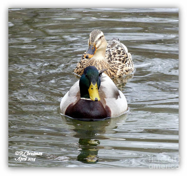 Duck Poster featuring the photograph The Two Of Us by Rennae Christman