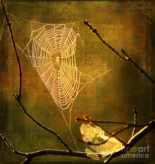 Spider Poster featuring the photograph The Web We Weave by Darren Fisher