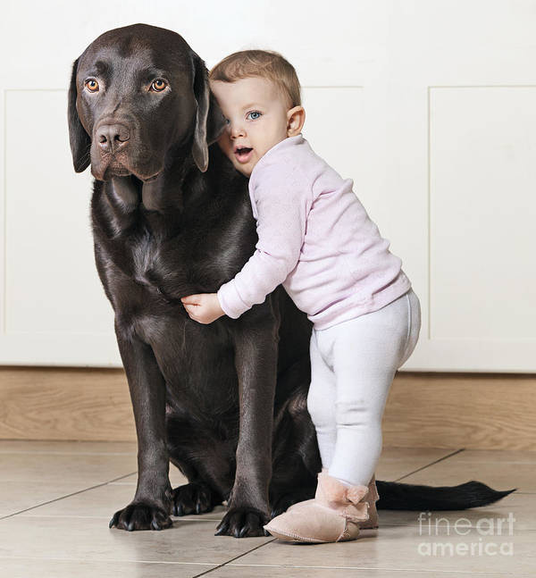 Chocolate Labrador Poster featuring the photograph Toddler With Dog by Justin Paget