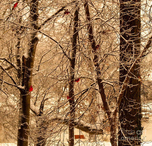 Cardinal Bird Prints Poster featuring the photograph Tree Of Life by Jinx Farmer