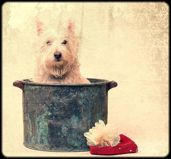 Dog Poster featuring the photograph Vintage Bathtime by Edward Fielding