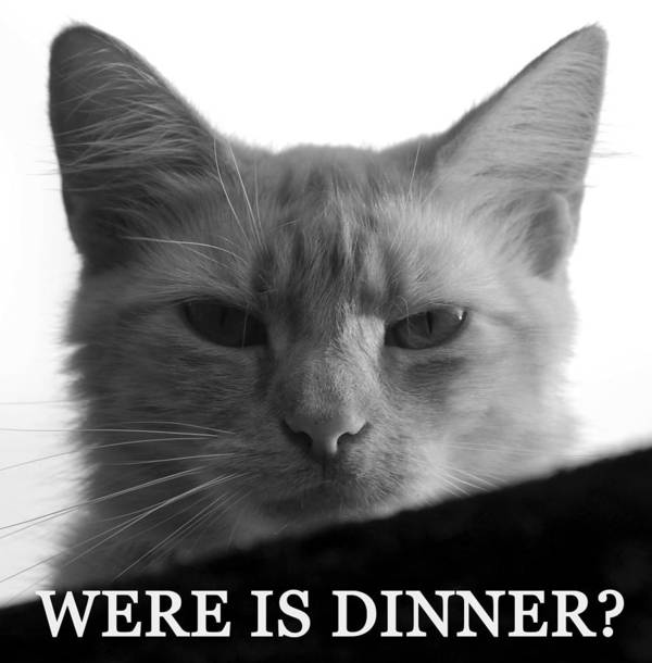 Cat Poster featuring the photograph Were Is Dinner by David Lee Thompson