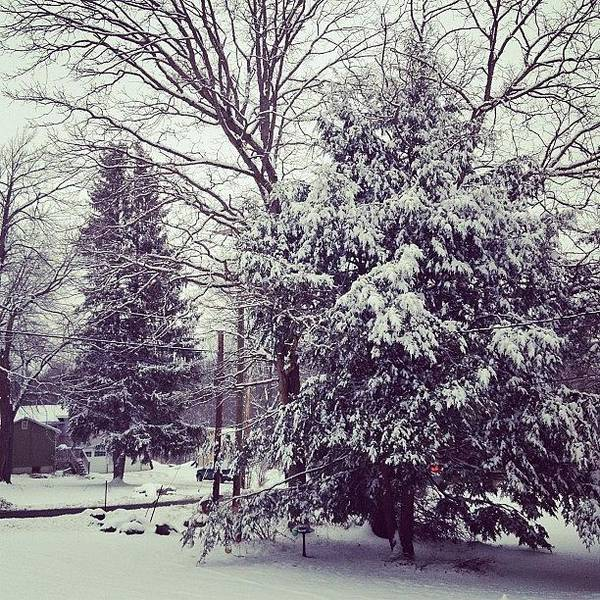 Yay Poster featuring the photograph #winter #snow #yay #pinetree #pine by Amber Campanaro