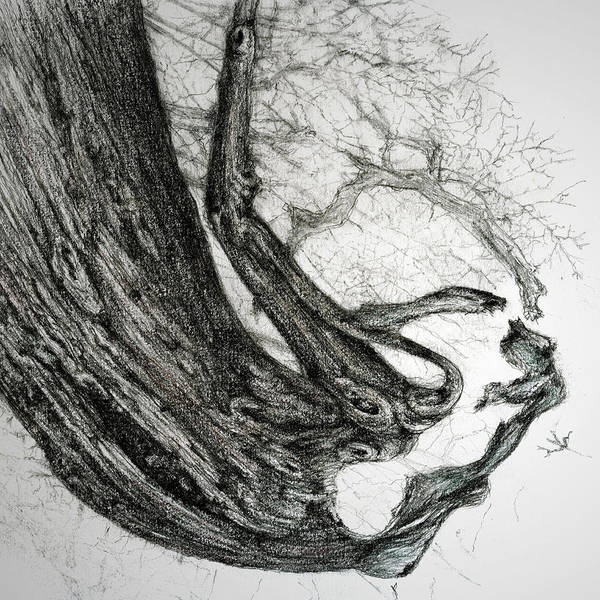 Tree Poster featuring the drawing Woman by Penny Collins