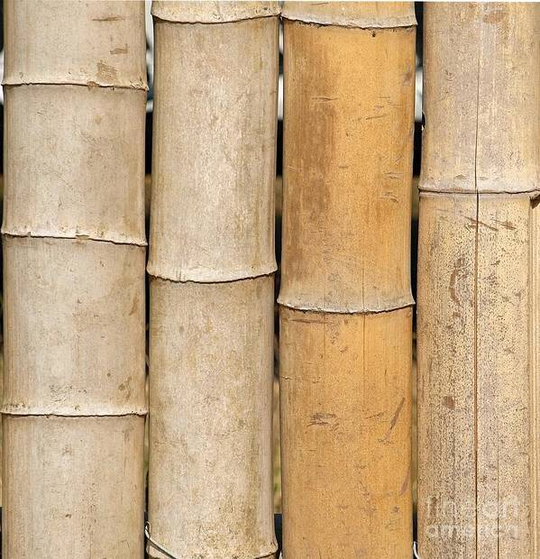 Bamboo Poster featuring the photograph Straight Bamboo Poles by Yali Shi