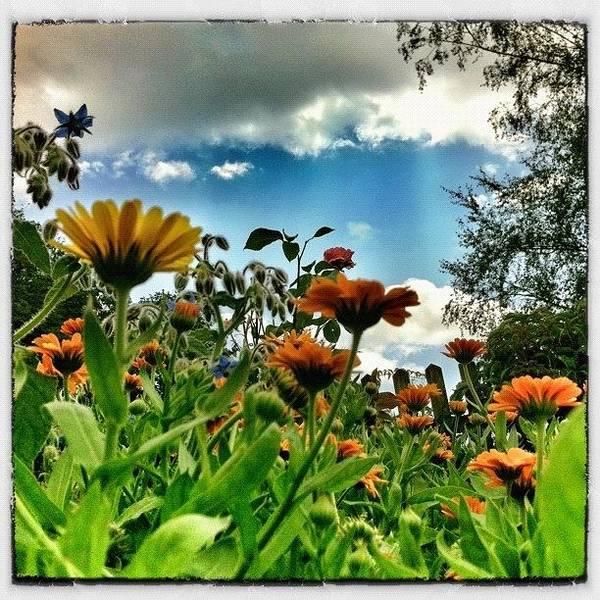 Myswitzerland Poster featuring the photograph Flowerpower! by Urs Steiner