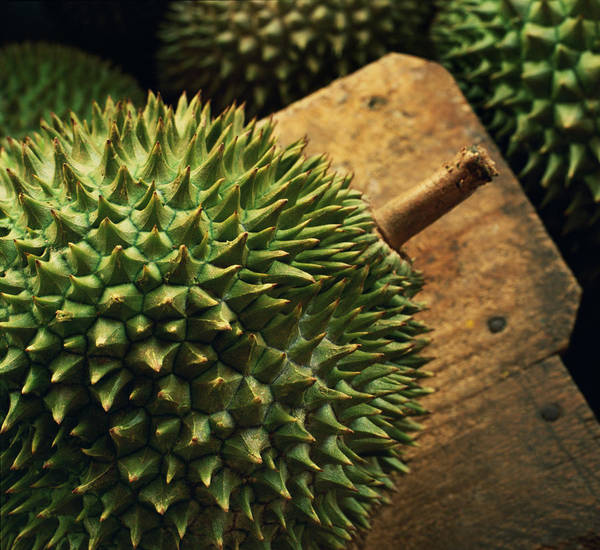 One Object Poster featuring the photograph A Durian Fruit - Popular In South East by Justin Guariglia