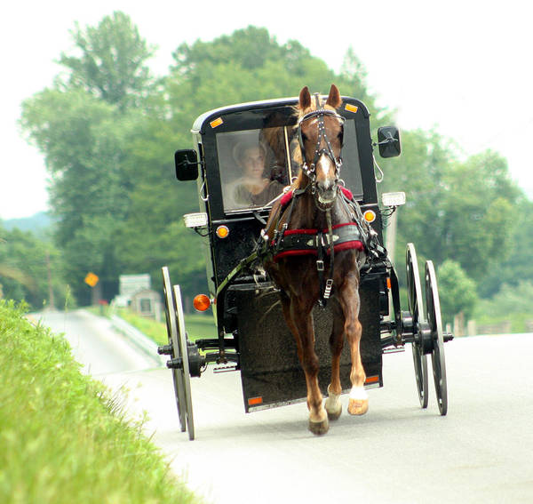 Amish Poster featuring the photograph Amish Buggy On The Road by Emanuel Tanjala