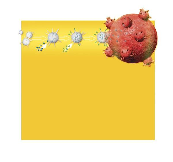 Cell Poster featuring the photograph Anti-cancer Bacteria, Artwork by Claus Lunau