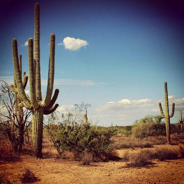 Desert Poster featuring the photograph Arizona by Luisa Azzolini