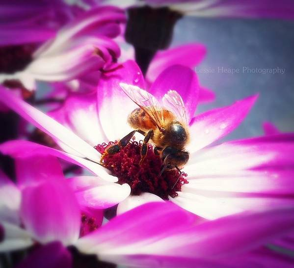 Macro Poster featuring the photograph Buzz Wee Bees Ll by Lessie Heape