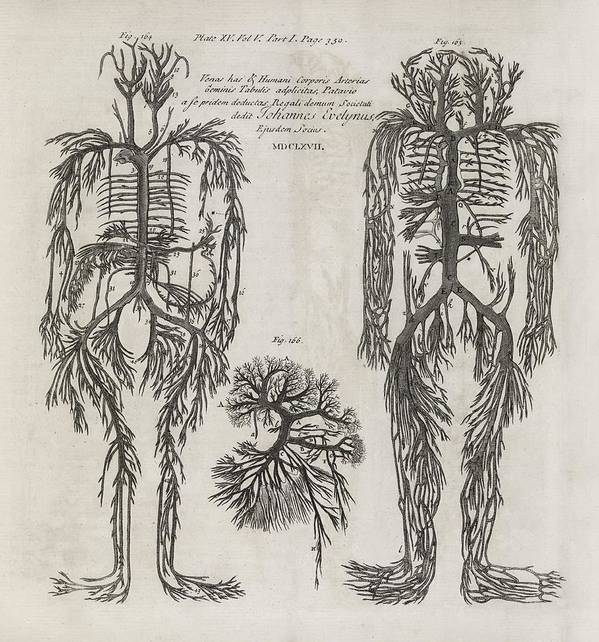 Evelyn Tables Poster featuring the photograph Evelyn Table Blood Vessels, 17th Century by Middle Temple Library