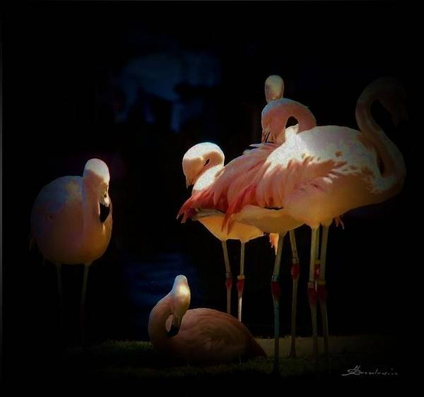 Tropical Birds Flamingo Poster featuring the photograph Flamingo 2 by Andrew Drozdowicz